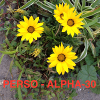 Séance PERSONNALISATION (ALPHA-30mn)