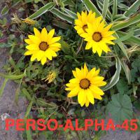 Séance PERSONNALISATION (ALPHA-45mn)