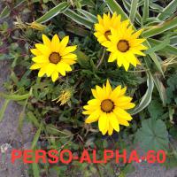 Séance PERSONNALISATION (ALPHA-60mn)